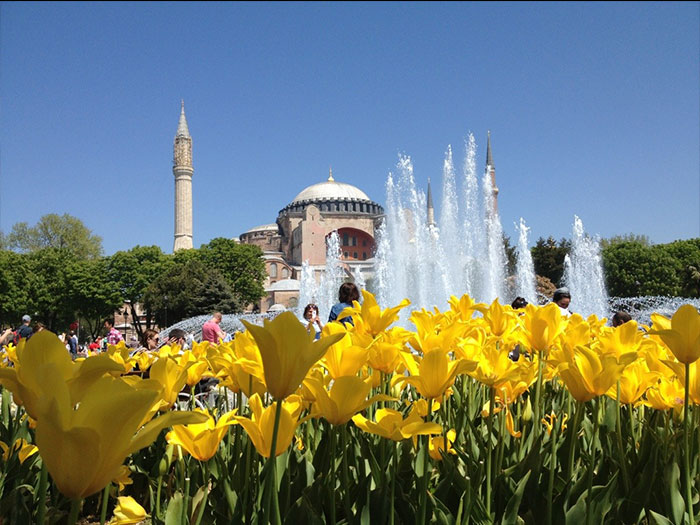 Тюльпан - символ Турции